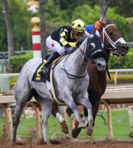 Hestevæddeløb - jockey på hest er i gang med et galop væddeløb som man kan spille på